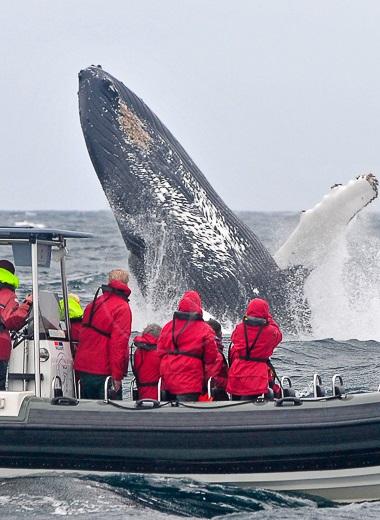 whalewatching pico
